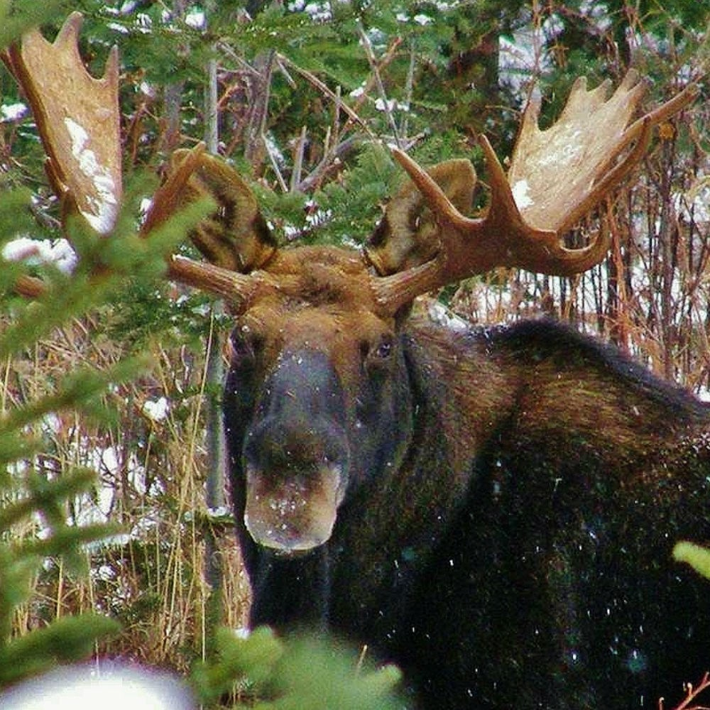 rencontre foret montmorency